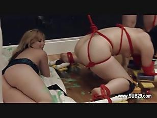 pussy_1648477